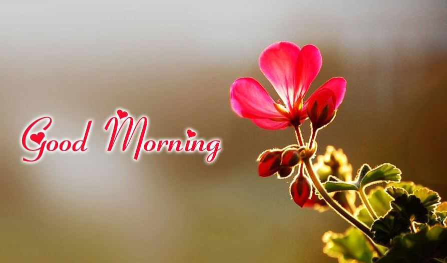 Beautiful Good Morning Images Pic