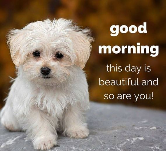 Good Morning Beautiful Quotes Images for Friends and Family Image