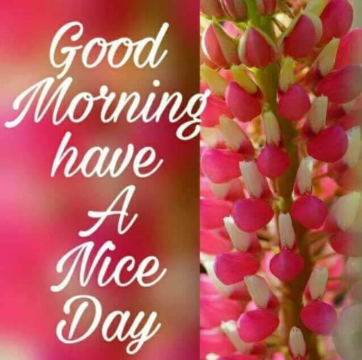 Good Morning Have a Nice Day Flowers Pic Image
