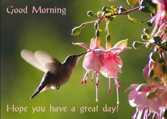 Good Morning Hope you have a great day Image