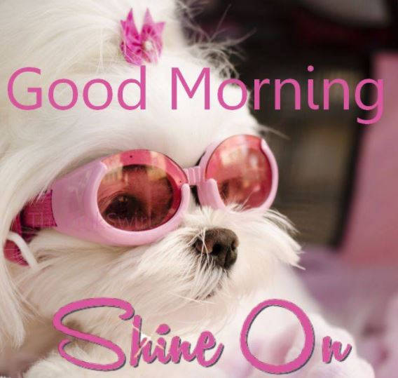 Good Morning Shine On Images Pic