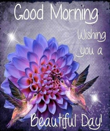 Good Morning Wishing you a Beautiful Day Image