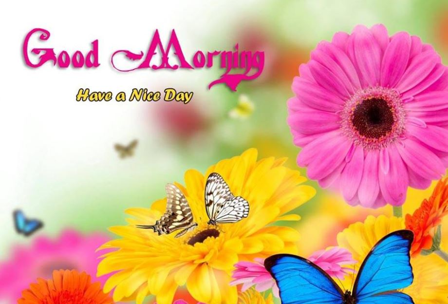 Have a Nice Day Good Morning Flowers Images for Facebook