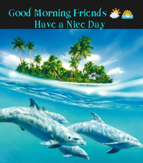 Have a Nice Day Good Morning Images for Friends