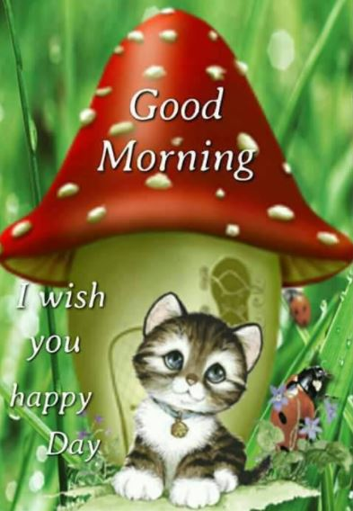 Wish you a Happy Day Good Morning Image