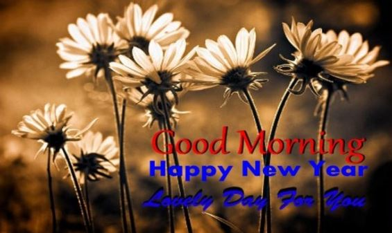 Good Morning Happy New Year Lovely Day for You