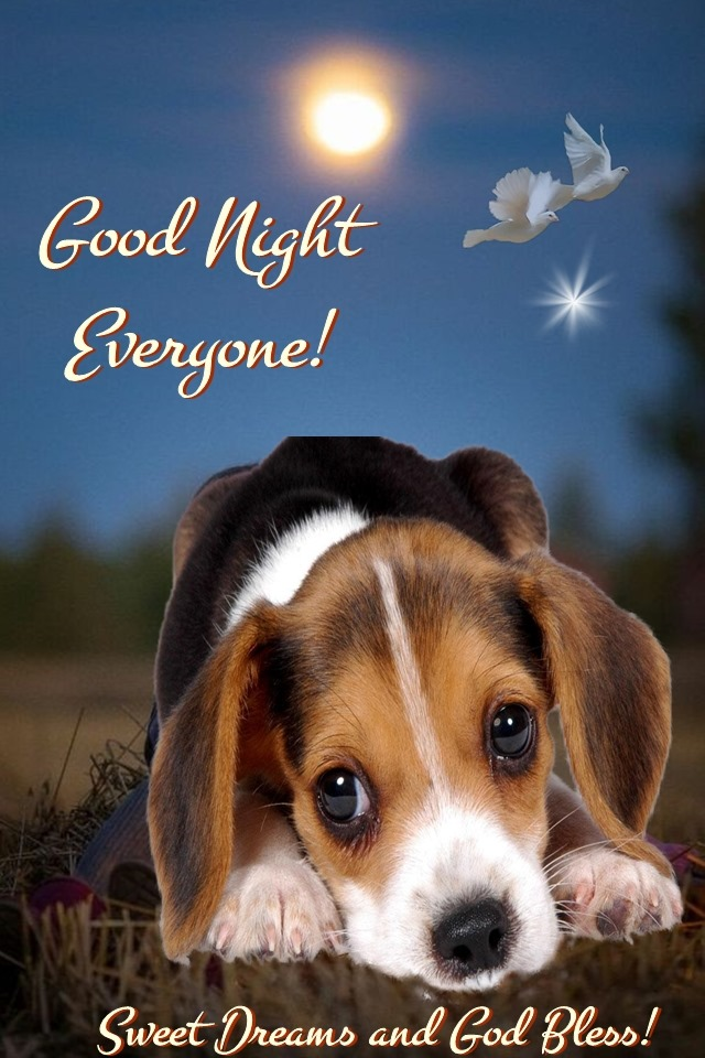 Cute Dog Good Night Everyone Sweet Dreams and God Bless Pics