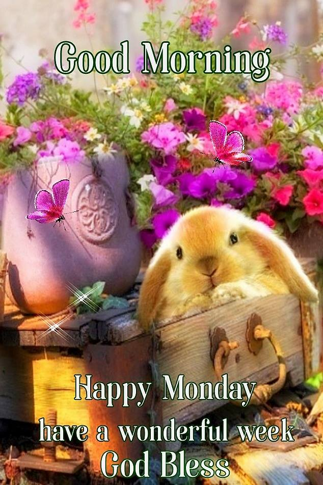 Cute Good Morning Happy Monday Have a Wonderful Week God Bless Wishes Pictures
