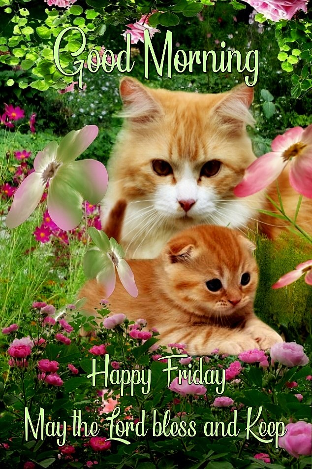 Good Morning Cats Happy Friday May Lord Bless Images