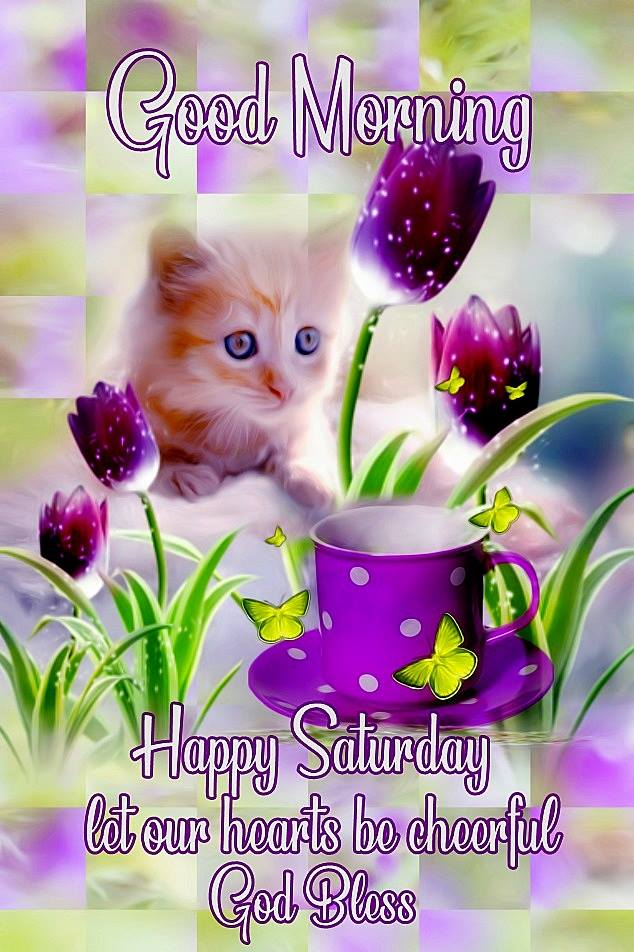 Good Morning Happy Saturday God Bless Cute Cat Image Picture