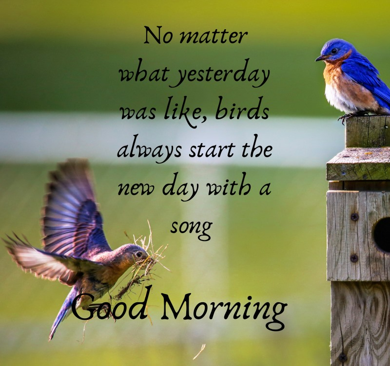 Good Morning Quotes Wishes Bird Images Star the day with a song