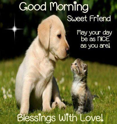 Good Morning Sweet Friend Blessings with Love Cat Dog Images
