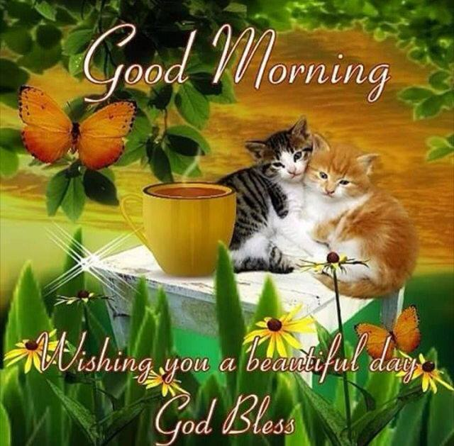 Good Morning Wishing you a Beautiful day God Bless Pics