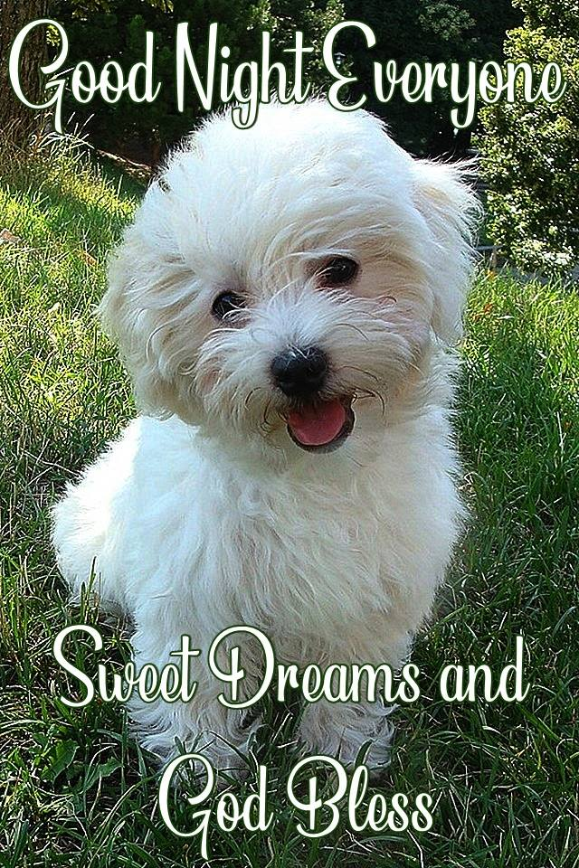 Good Night Everyone Sweet Dreams God Bless Puppy Images