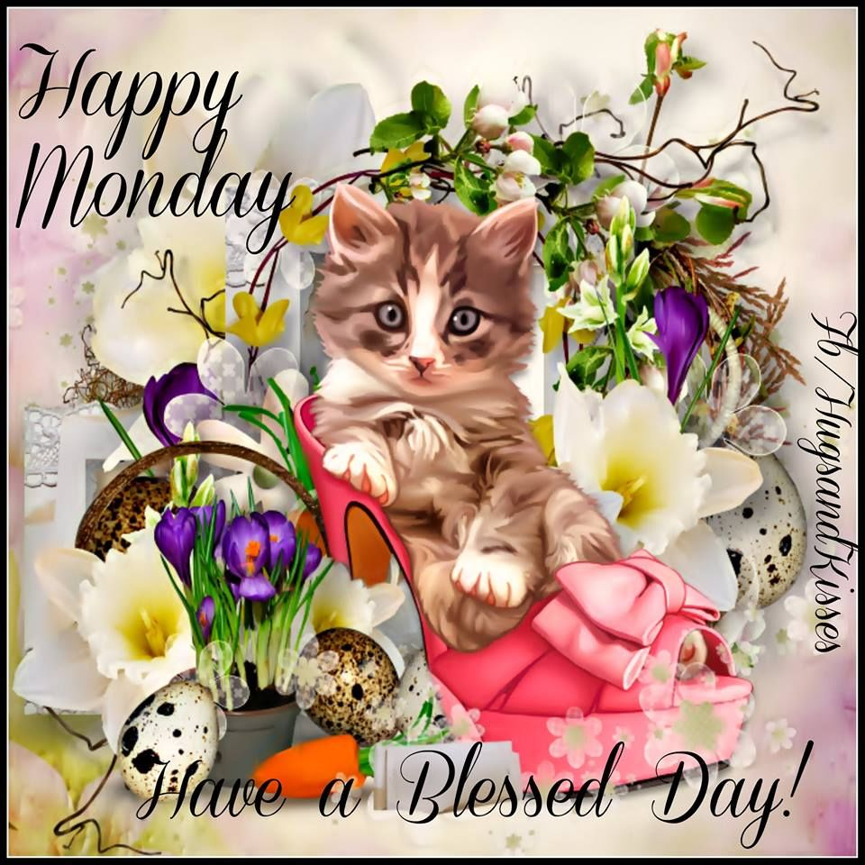 Happy Monday Have a Blessed Day Cat Nature Pictures