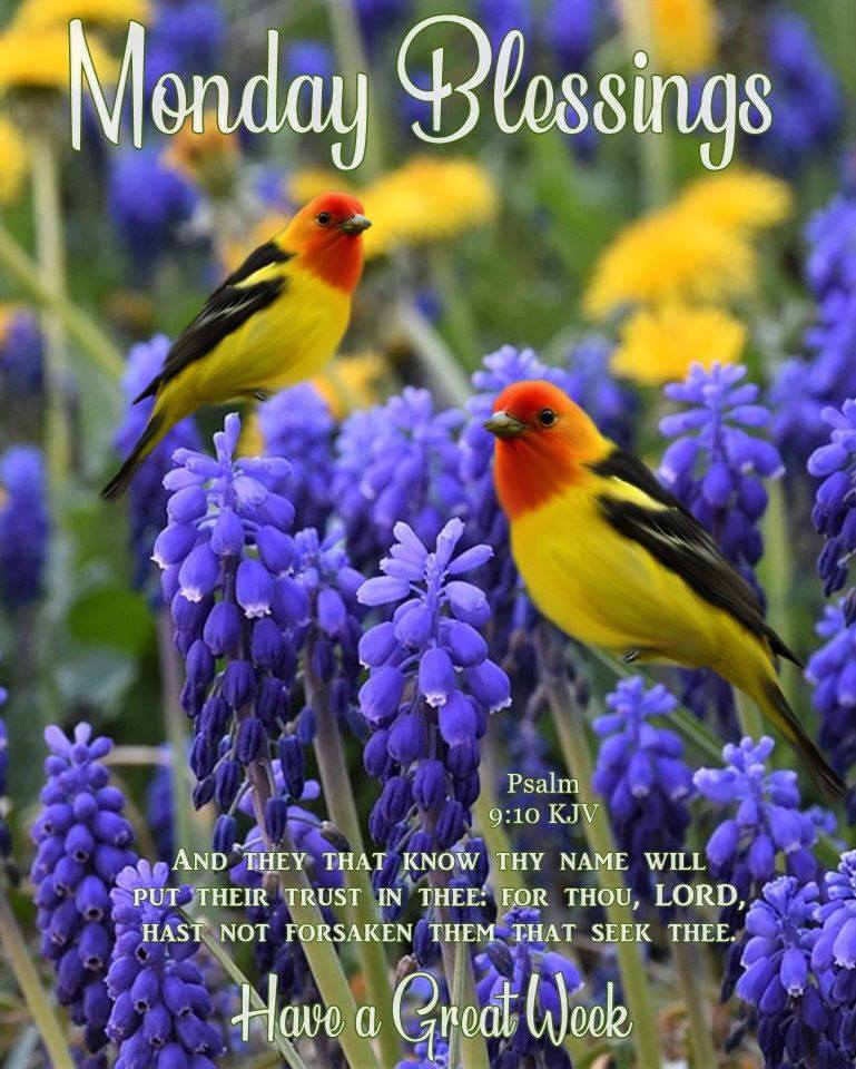 Monday Blessings Birds Have a Great Week Images